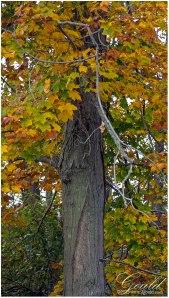 OhioFoliage1web