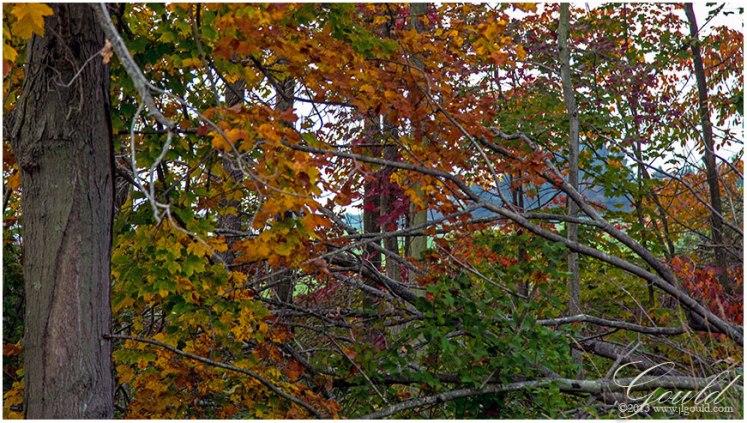 OhioFoliage2web