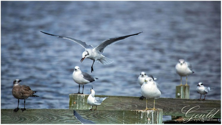 BirdAnnoyanceweb