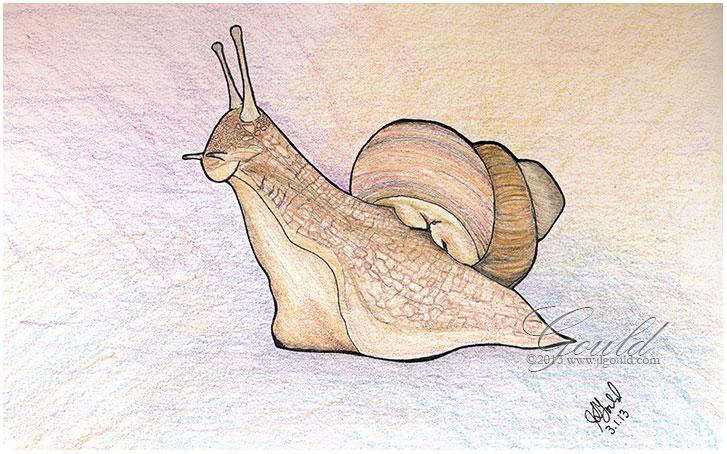 SnailDayweb