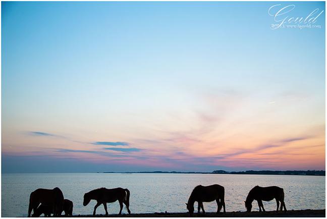 SunsetPonies