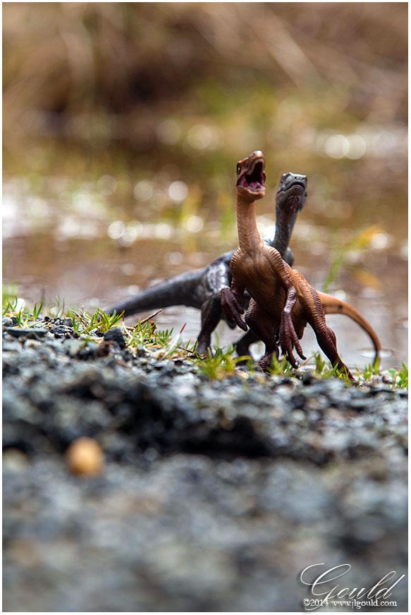 Raptor2web