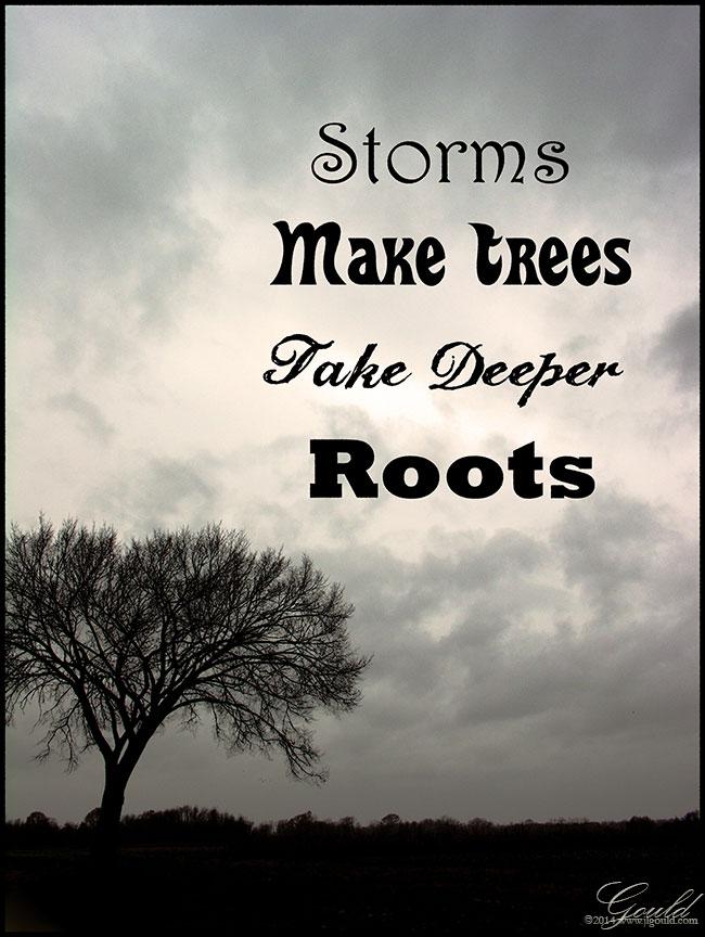 StormsTreesweb
