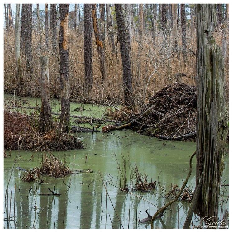 Swamped2web