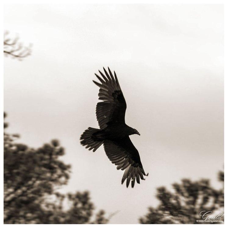 Vultureweb