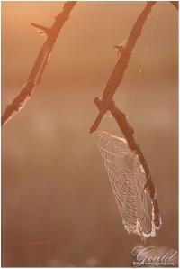 SunriseWebweb