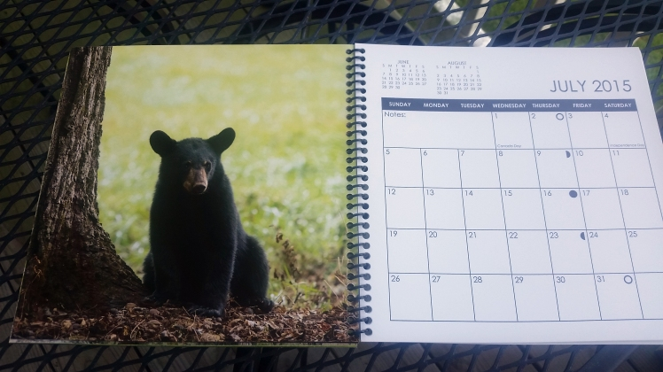 2015 Desktop Calendar- July.  Black Bear Cub, Great Smoky Mountains National Park, Tennessee
