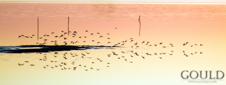 Birds Reflected in the still water under the setting sun.