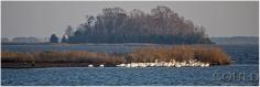 pelicansandeaglesweb