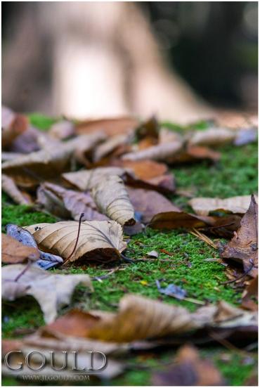 LeavesOnMossweb