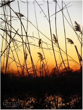 SunsetPaintsItsPictureweb