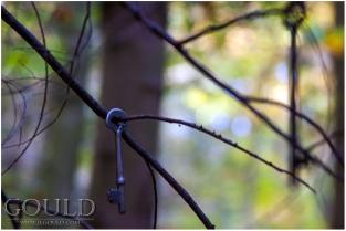 TreeKeysweb
