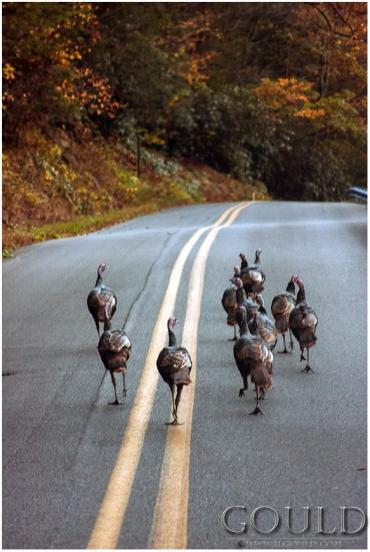 TurkeyGang1web
