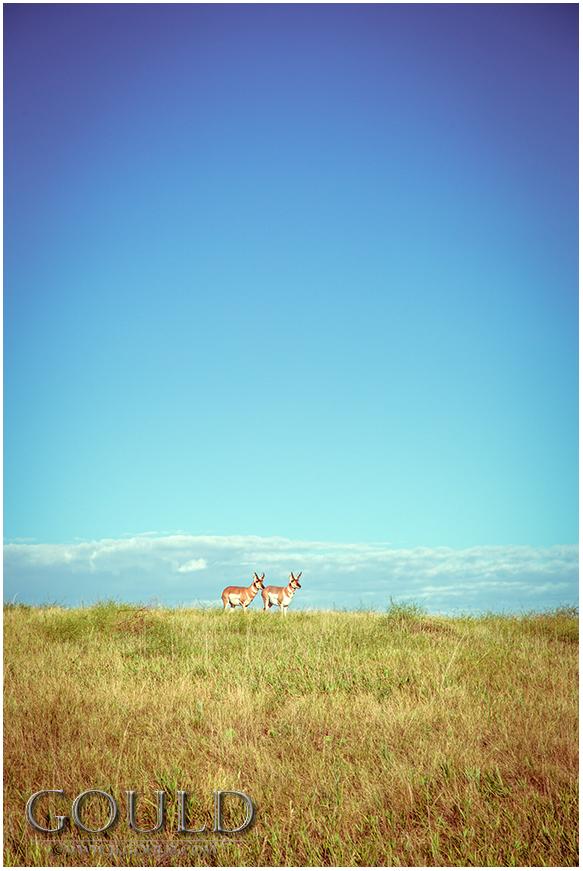 BadlandsAntelope1554web